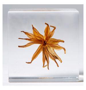 Yellow Fennel Flower Sola Cube