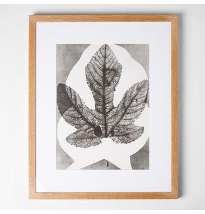 'Midas' Framed Print