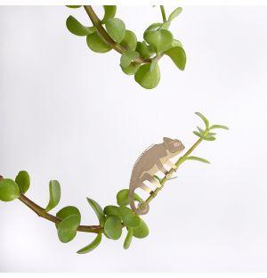 Plant Animal Chameleon