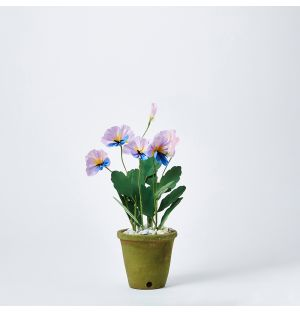 Pansy Paper Plant