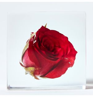Rose Cube