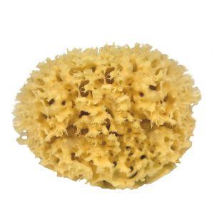 Natural Mediterranean Sponge 10cm
